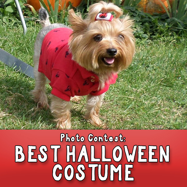 Best Pet Halloween Costume Contest Button