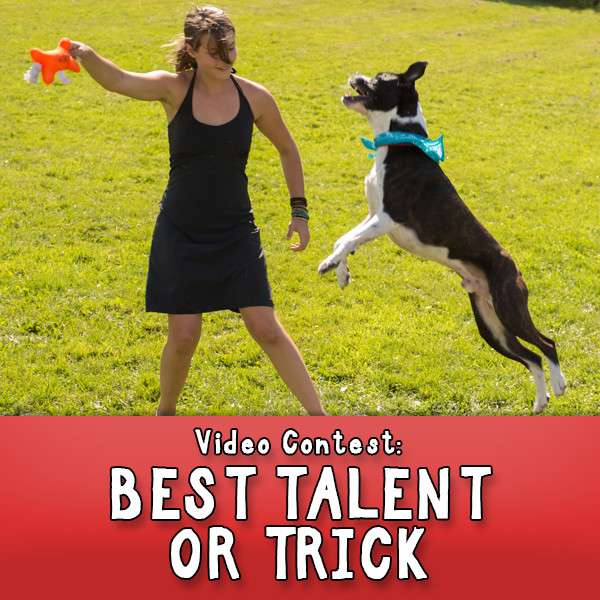 Best Dog Trick Contest Button