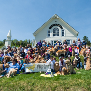 Golden Jubilee Dog Party