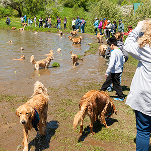 Dog Party at the Dog Pond