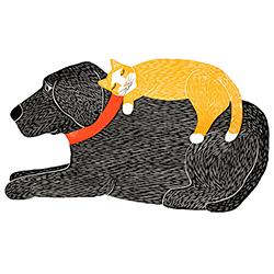Catnap - Sticker